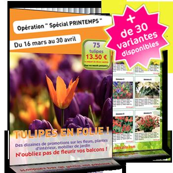 Flyer 9 annonces pour offre de fleurs et plantes for Offre des fleurs